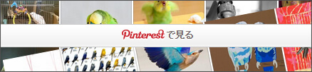 まめるりは Birds collection:Pinterest